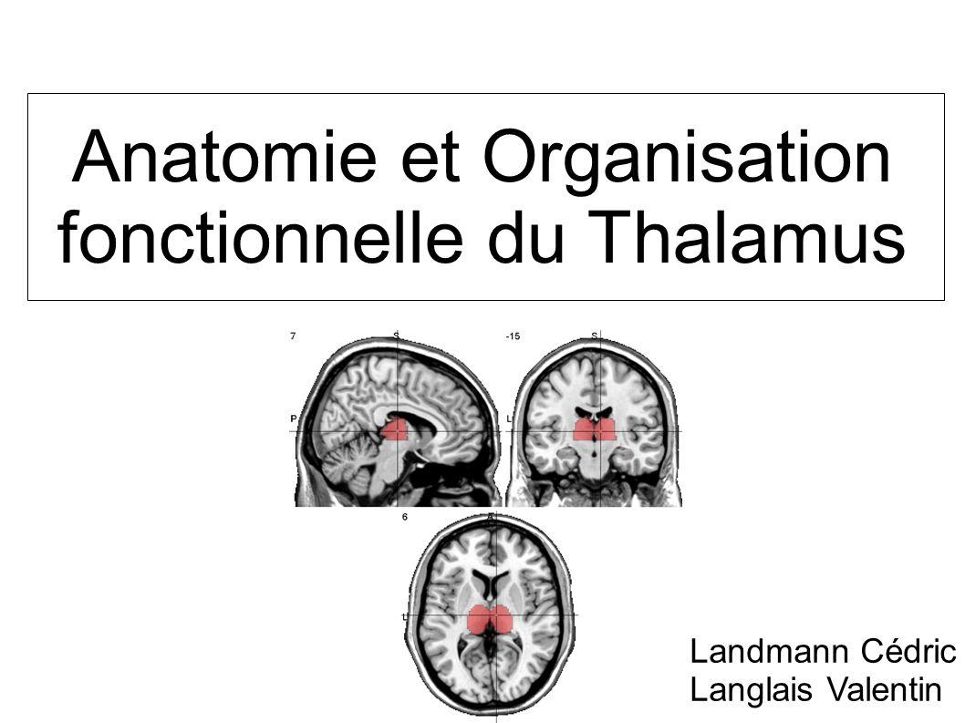 Anatomie et Organisation fonctionnelle du Thalamus Landmann Cédric Langlais Valentin
