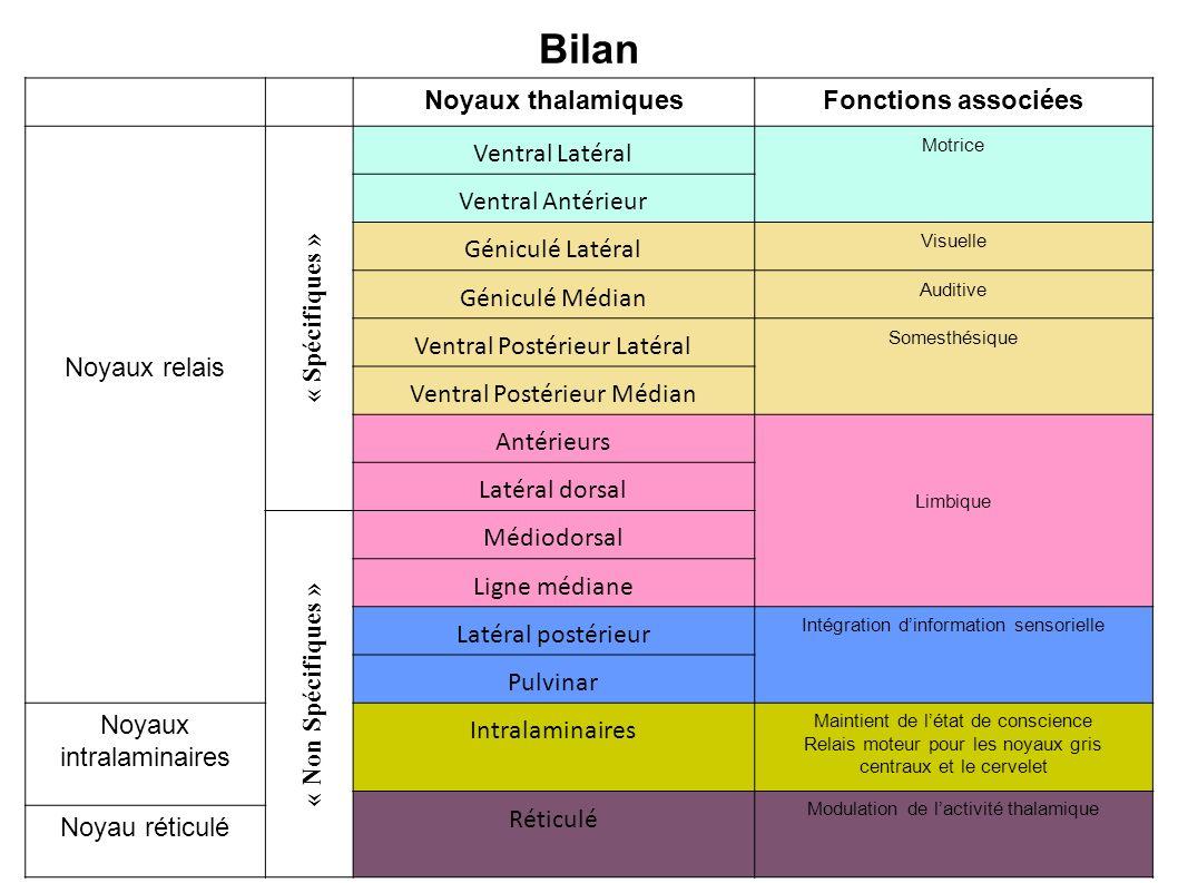 Bilan Noyaux thalamiquesFonctions associées Noyaux relais « Spécifiques » Ventral Latéral Motrice Ventral Antérieur Géniculé Latéral Visuelle Géniculé