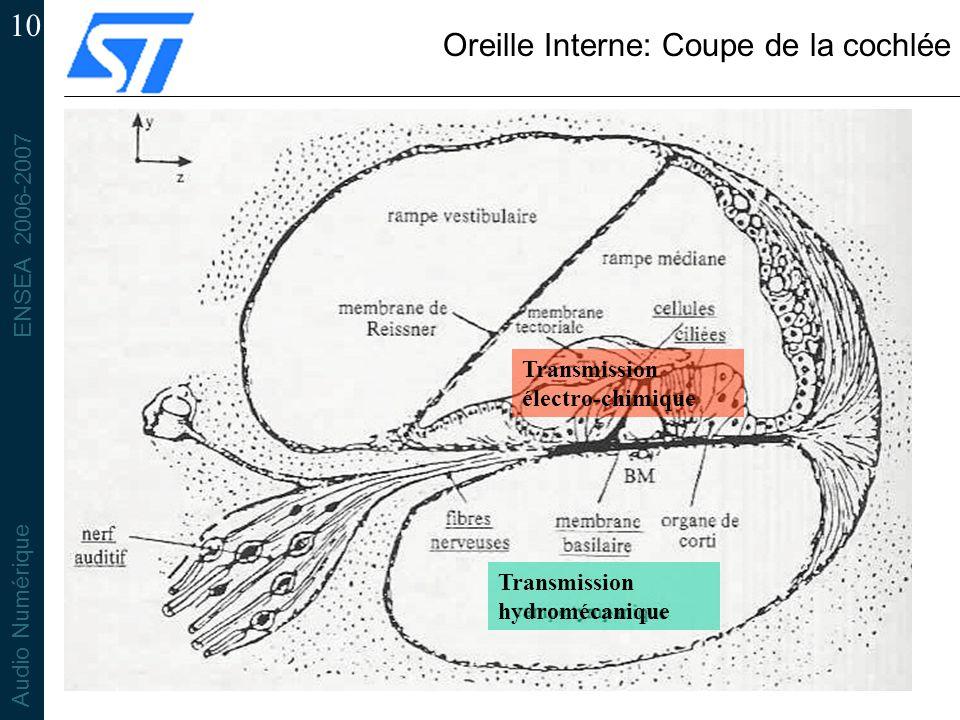 ENSEA 2006-2007 Audio Numérique 10 Oreille Interne: Coupe de la cochlée Transmission électro-chimique Transmission hydromécanique