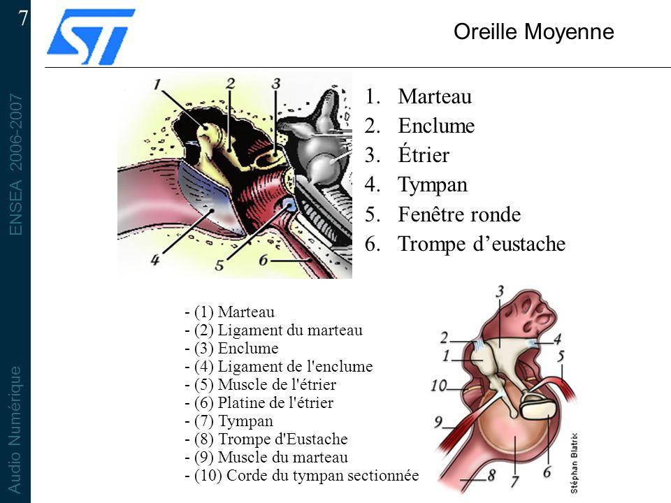 ENSEA 2006-2007 Audio Numérique 7 Oreille Moyenne 1. Marteau 2. Enclume 3. Étrier 4. Tympan 5. Fenêtre ronde 6. Trompe deustache - (1) Marteau - (2) L