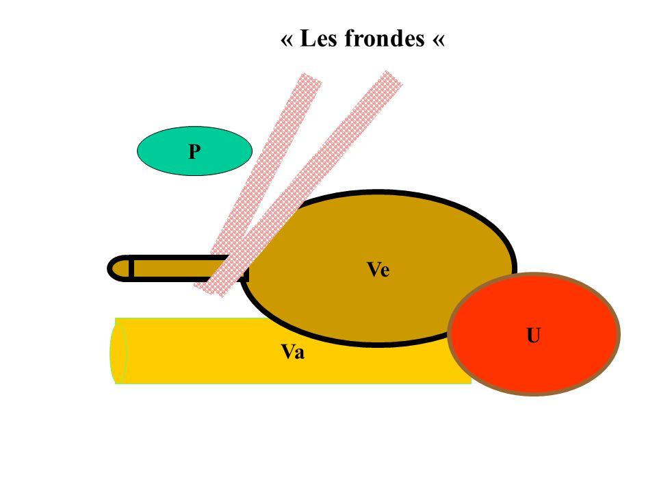 Va Ve U « Les frondes « P