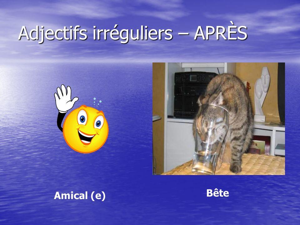 Adjectifs irréguliers – APRÈS Amical (e) Bête