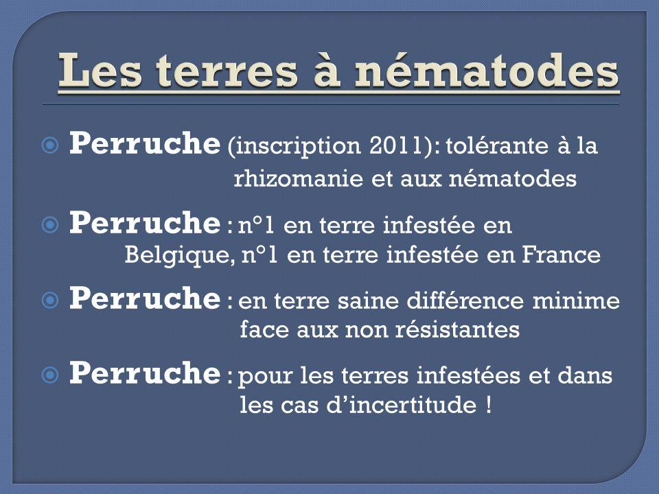 Perruche (inscription 2011): tolérante à la rhizomanie et aux nématodes Perruche : n°1 en terre infestée en Belgique, n°1 en terre infestée en France