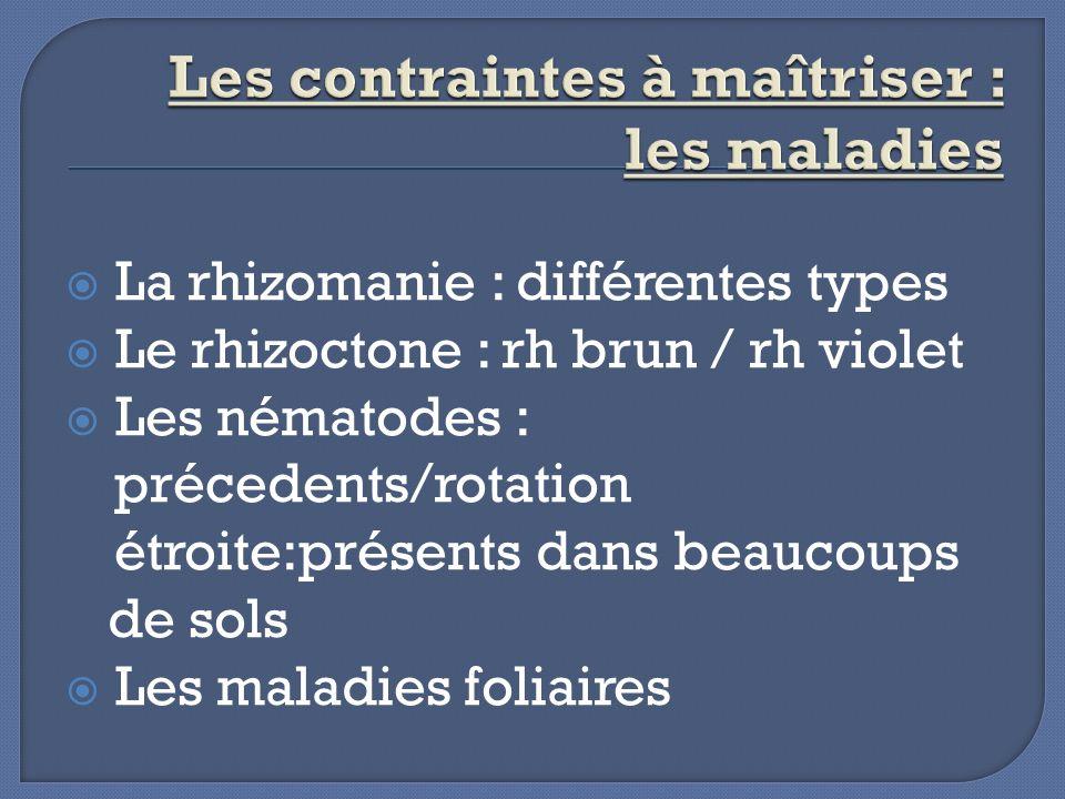 La rhizomanie : différentes types Le rhizoctone : rh brun / rh violet Les nématodes : précedents/rotation étroite:présents dans beaucoups de sols Les