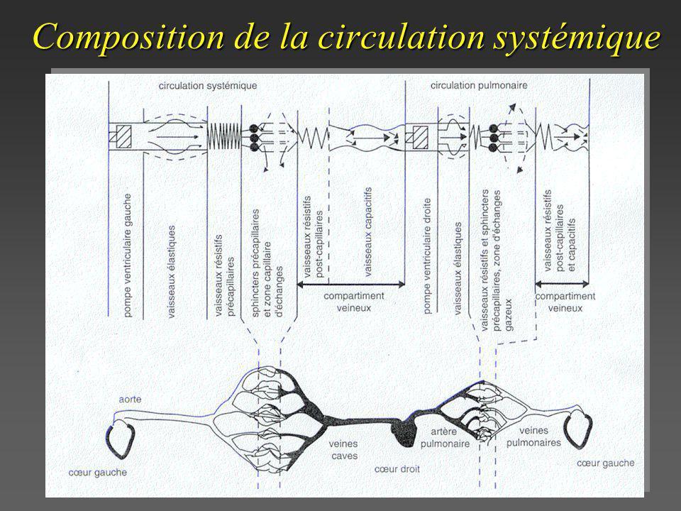 Composition de la circulation systémique