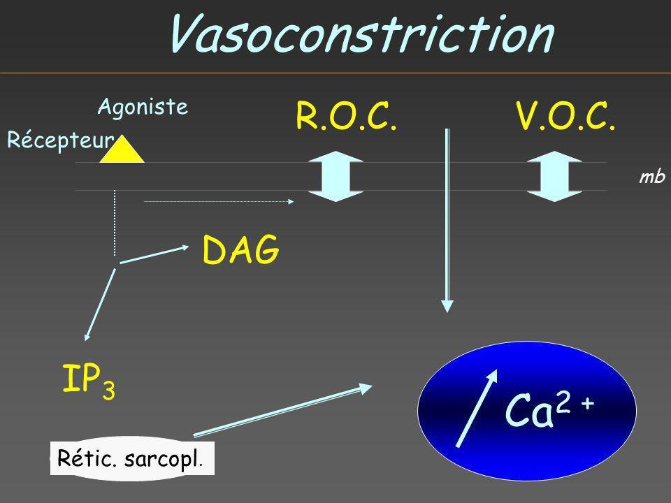 Vasoconstriction Agoniste Récepteur IP 3 DAG R.O.C.V.O.C. Rétic. sarcopl. Ca 2 + mb