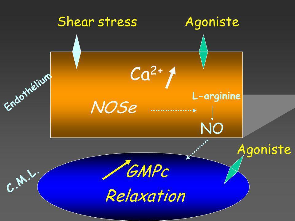 AgonisteShear stress Ca 2+ NOSe L-arginine NO GMPc Relaxation Endothélium C.M.L. Agoniste