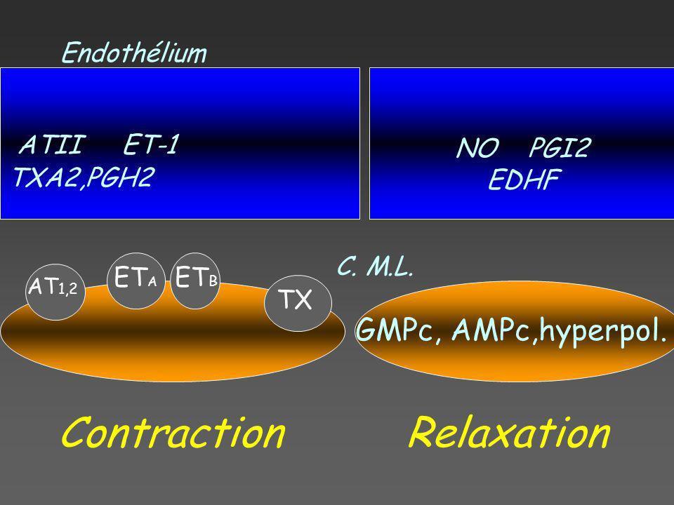 ATII ET-1 TXA2,PGH2 NO PGI2 EDHF AT 1,2 ET A ET B TX GMPc, AMPc,hyperpol. ContractionRelaxation Endothélium C. M.L.
