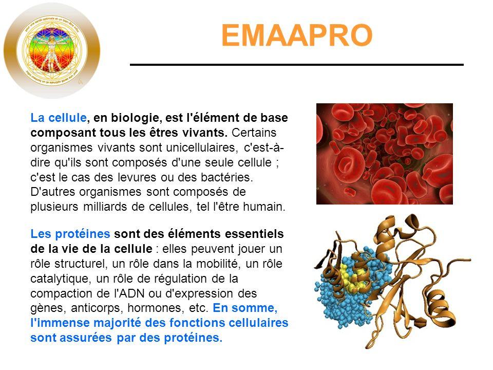 EMAAPRO La cellule, en biologie, est l'élément de base composant tous les êtres vivants. Certains organismes vivants sont unicellulaires, c'est-à- dir