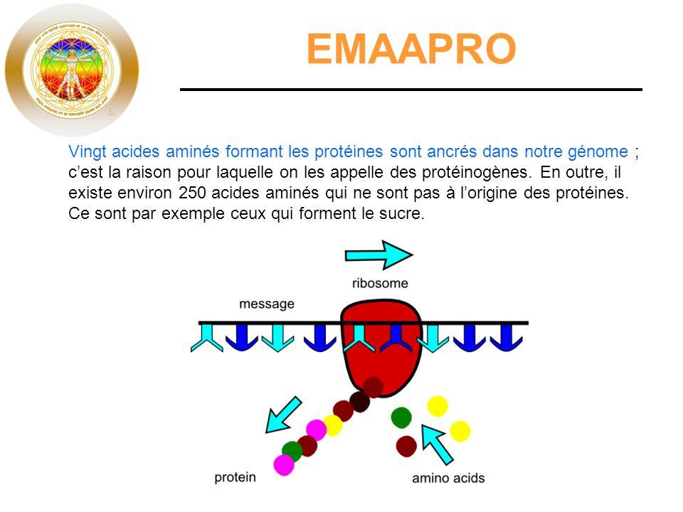 EMAAPRO Vingt acides aminés formant les protéines sont ancrés dans notre génome ; cest la raison pour laquelle on les appelle des protéinogènes. En ou