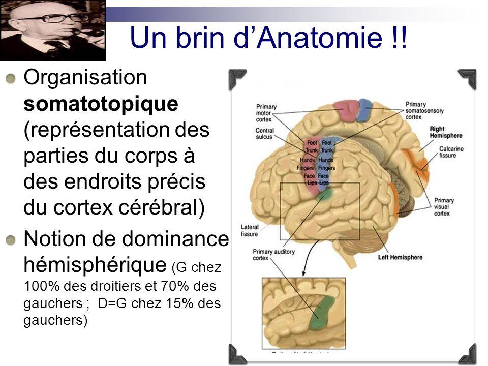 Anatomie vasculaire 2 systèmes de circulation Antérieure A carotide interne A cérébrale Moyenne (sylvienne) et antérieure Postérieure Artère vertébrale Artère basilaire Artère cérébrale postérieure