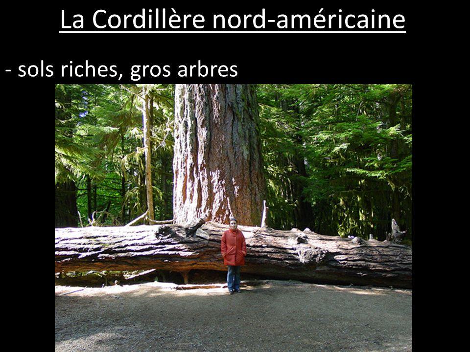La Cordillère nord-américaine - sols riches, gros arbres