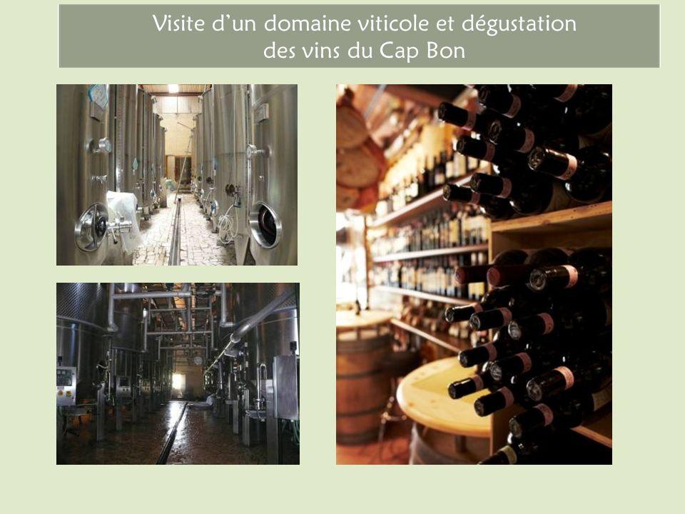 Visite dun domaine viticole et dégustation des vins du Cap Bon