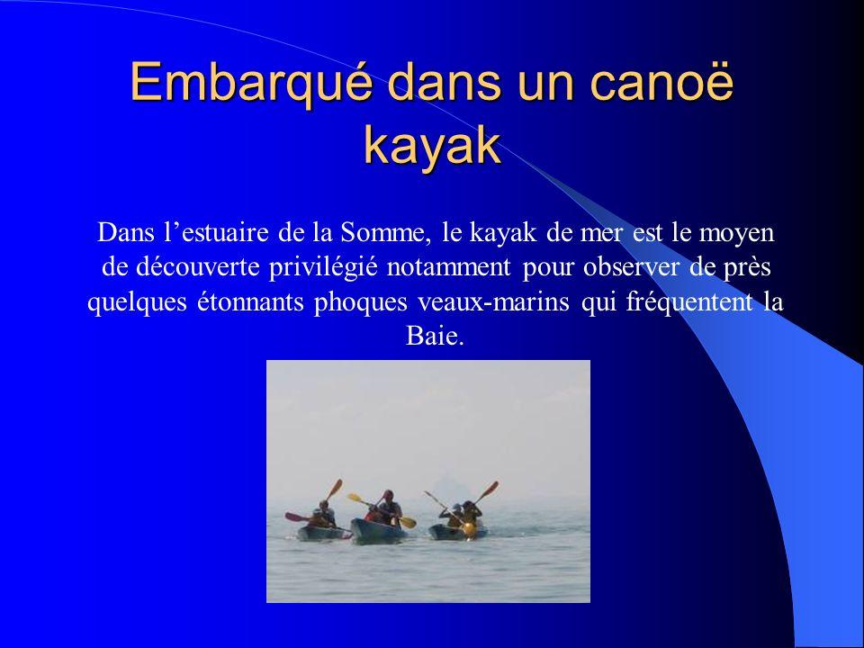 Embarqué dans un canoë kayak Dans lestuaire de la Somme, le kayak de mer est le moyen de découverte privilégié notamment pour observer de près quelques étonnants phoques veaux-marins qui fréquentent la Baie.
