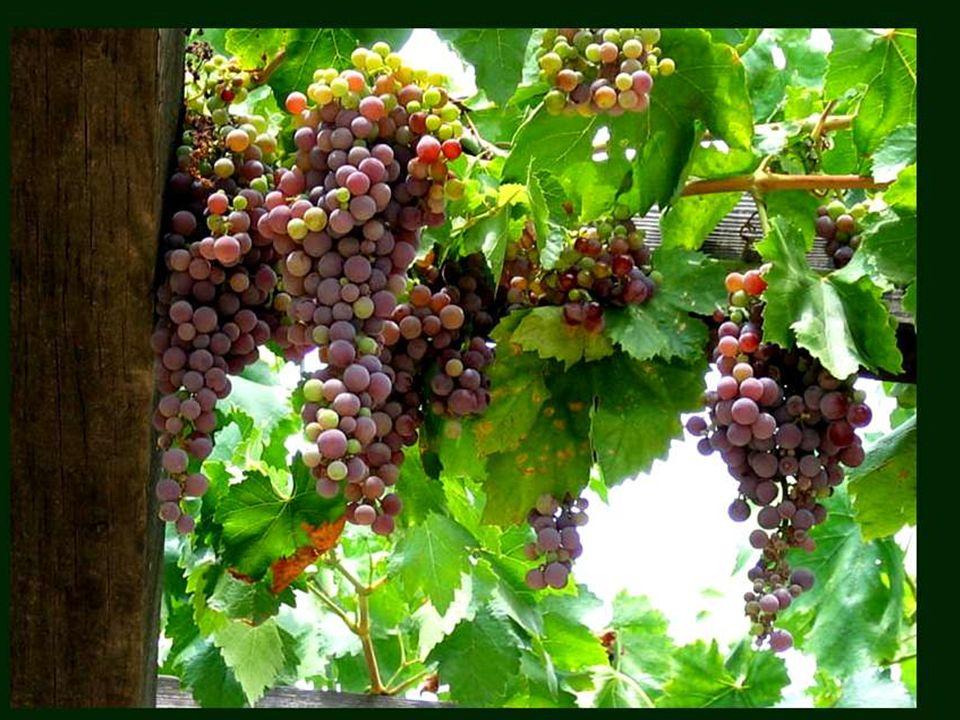 A bon vin ne faut point d enseigne. Proverbe français