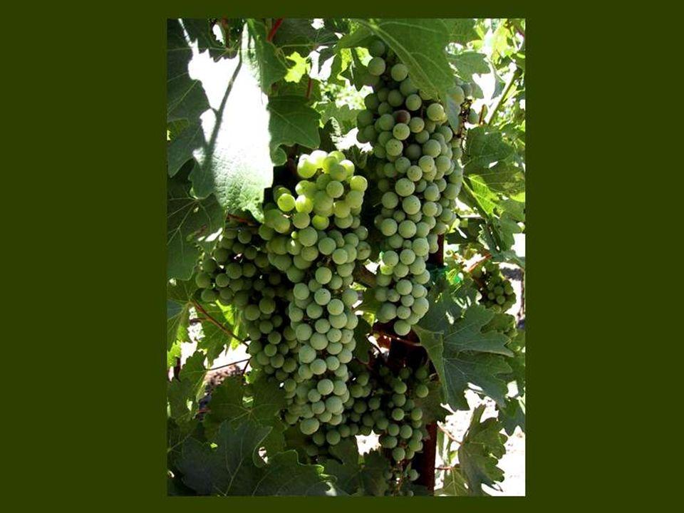 Le vin est innocent, seul l ivrogne est coupable. Proverbe russe
