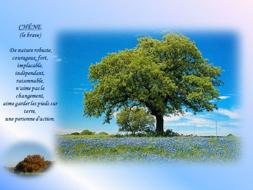 CHÊNE (le brave) De nature robuste, courageux, fort, implacable, indépendant, raisonnable, n aime pas le changement, aime garder les pieds sur terre, une personne d action.