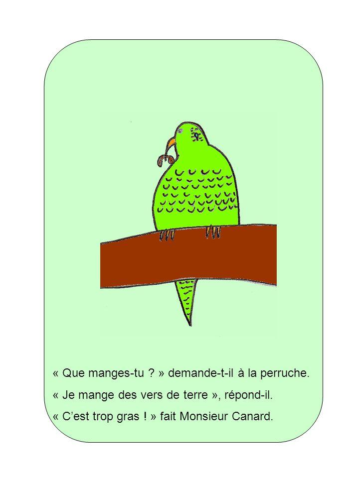 « Que manges-tu ? » demande-t-il à la perruche. « Je mange des vers de terre », répond-il. « Cest trop gras ! » fait Monsieur Canard.