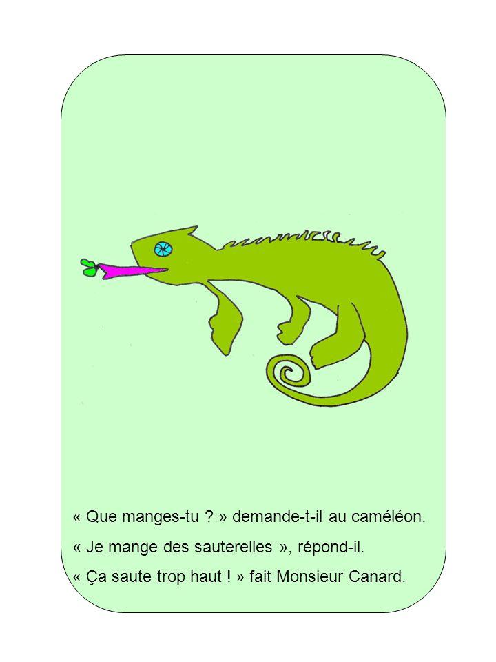 « Que manges-tu ? » demande-t-il au caméléon. « Je mange des sauterelles », répond-il. « Ça saute trop haut ! » fait Monsieur Canard.
