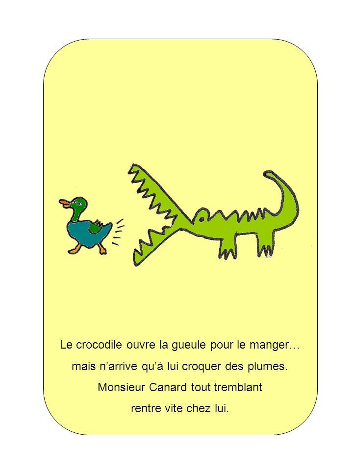 Le crocodile ouvre la gueule pour le manger… mais narrive quà lui croquer des plumes. Monsieur Canard tout tremblant rentre vite chez lui.