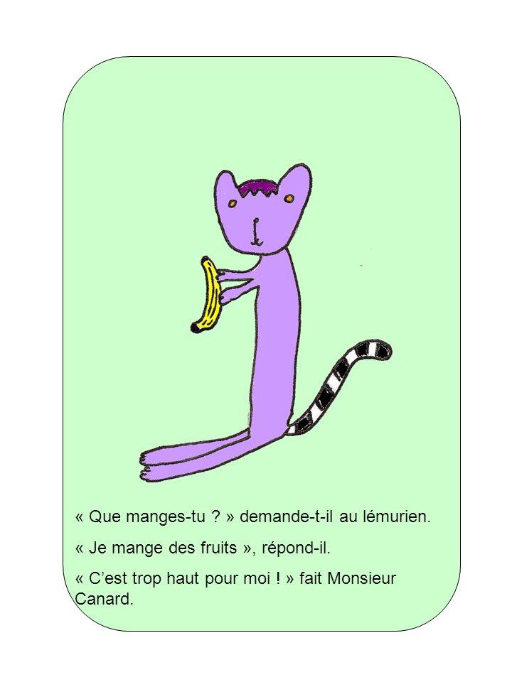« Que manges-tu ? » demande-t-il au lémurien. « Je mange des fruits », répond-il. « Cest trop haut pour moi ! » fait Monsieur Canard.
