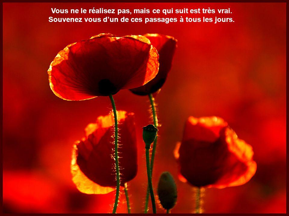 Musique: Nightingale Serenade Un Bouquet damitié.