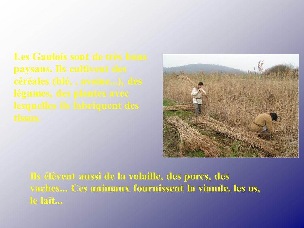 Les Gaulois sont de très bons paysans. Ils cultivent des céréales (blé,, avoine...), des légumes, des plantes avec lesquelles ils fabriquent des tissu