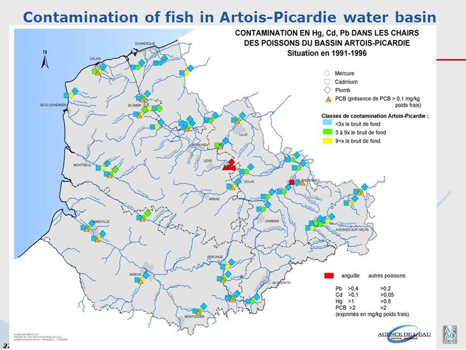 27 Par Jean Prygiel, Chef de Mission Ecologie du Milieu 3 juin 2003 Contamination of fish in Artois-Picardie water basin