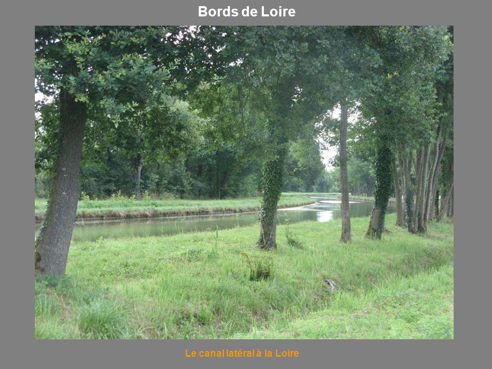 Bords de Loire Le canal latéral à la Loire