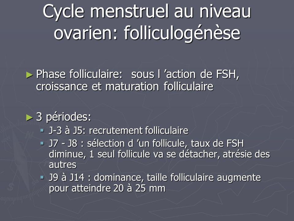 Cycle menstruel au niveau ovarien: folliculogénèse Phase folliculaire: sous l action de FSH, croissance et maturation folliculaire Phase folliculaire: sous l action de FSH, croissance et maturation folliculaire 3 périodes: 3 périodes: J-3 à J5: recrutement folliculaire J-3 à J5: recrutement folliculaire J7 - J8 : sélection d un follicule, taux de FSH diminue, 1 seul follicule va se détacher, atrésie des autres J7 - J8 : sélection d un follicule, taux de FSH diminue, 1 seul follicule va se détacher, atrésie des autres J9 à J14 : dominance, taille folliculaire augmente pour atteindre 20 à 25 mm J9 à J14 : dominance, taille folliculaire augmente pour atteindre 20 à 25 mm