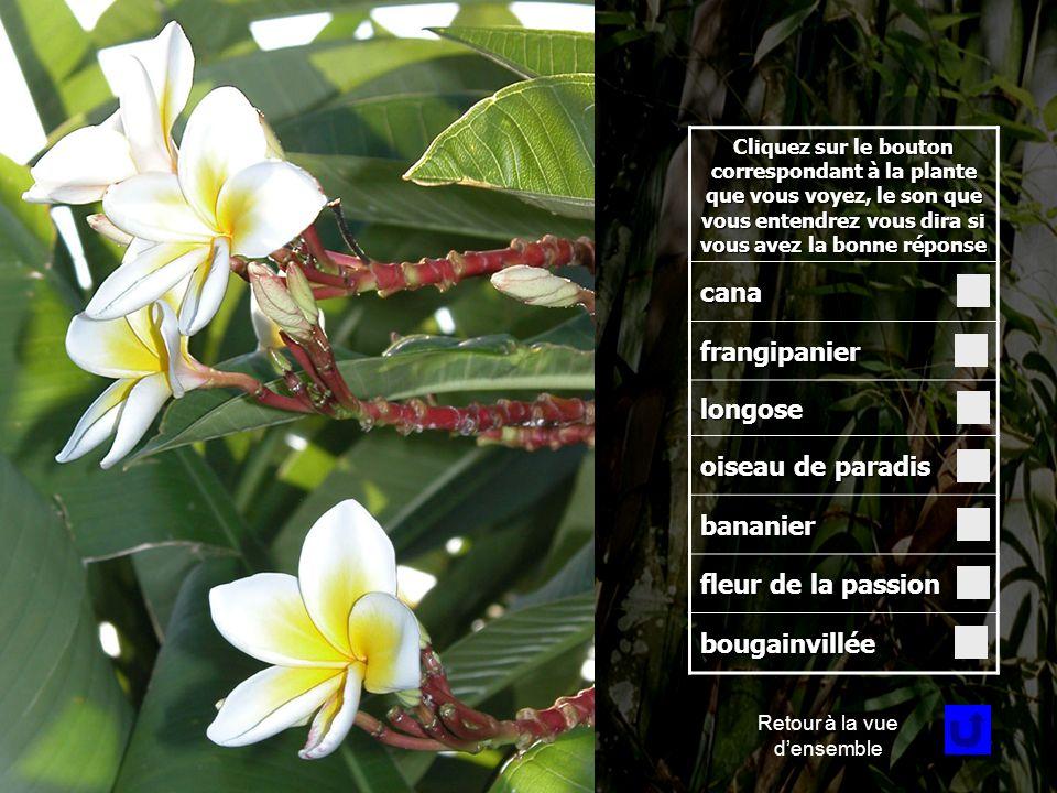 Fleur 1 Cliquez sur le bouton correspondant à la plante que vous voyez, le son que vous entendrez vous dira si vous avez la bonne réponse cana frangipanier longose oiseau de paradis bananier fleur de la passion bougainvillée Retour à la vue densemble