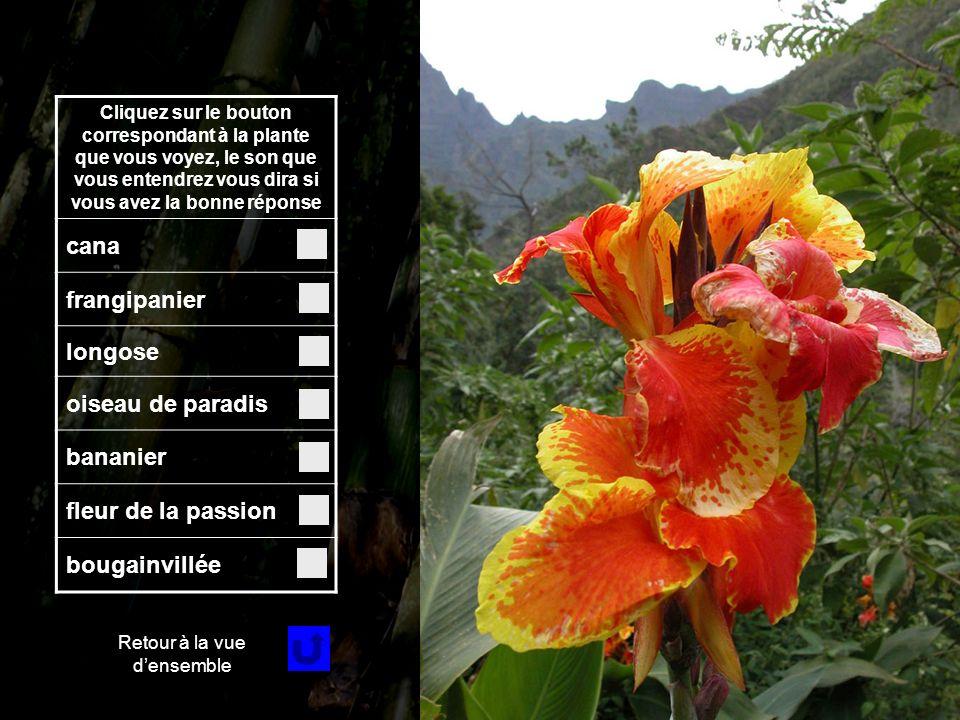 Fleur 2 Cliquez sur le bouton correspondant à la plante que vous voyez, le son que vous entendrez vous dira si vous avez la bonne réponse cana frangipanier longose oiseau de paradis bananier fleur de la passion bougainvillée Retour à la vue densemble