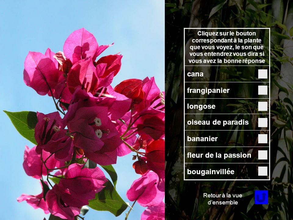 Fleur 3 Cliquez sur le bouton correspondant à la plante que vous voyez, le son que vous entendrez vous dira si vous avez la bonne réponse cana frangipanier longose oiseau de paradis bananier fleur de la passion bougainvillée Retour à la vue densemble