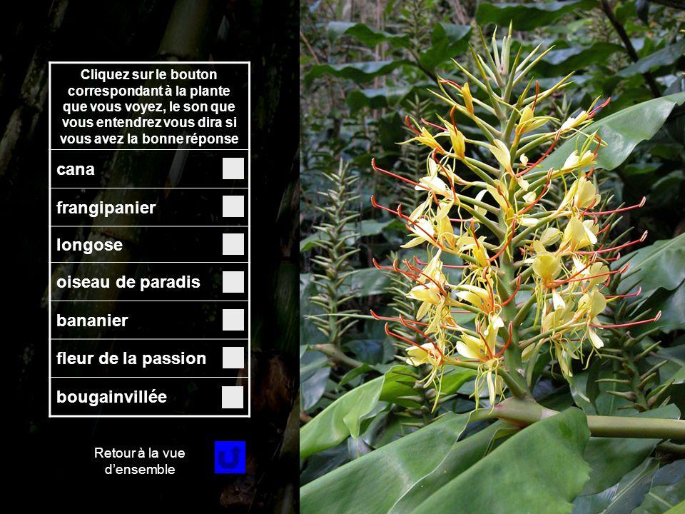 Fleur 4 Cliquez sur le bouton correspondant à la plante que vous voyez, le son que vous entendrez vous dira si vous avez la bonne réponse cana frangipanier longose oiseau de paradis bananier fleur de la passion bougainvillée Retour à la vue densemble