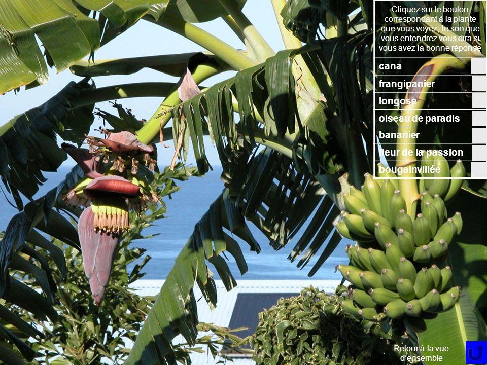 Fleur 7 Cliquez sur le bouton correspondant à la plante que vous voyez, le son que vous entendrez vous dira si vous avez la bonne réponse cana frangipanier longose oiseau de paradis bananier fleur de la passion bougainvillée Retour à la vue densemble