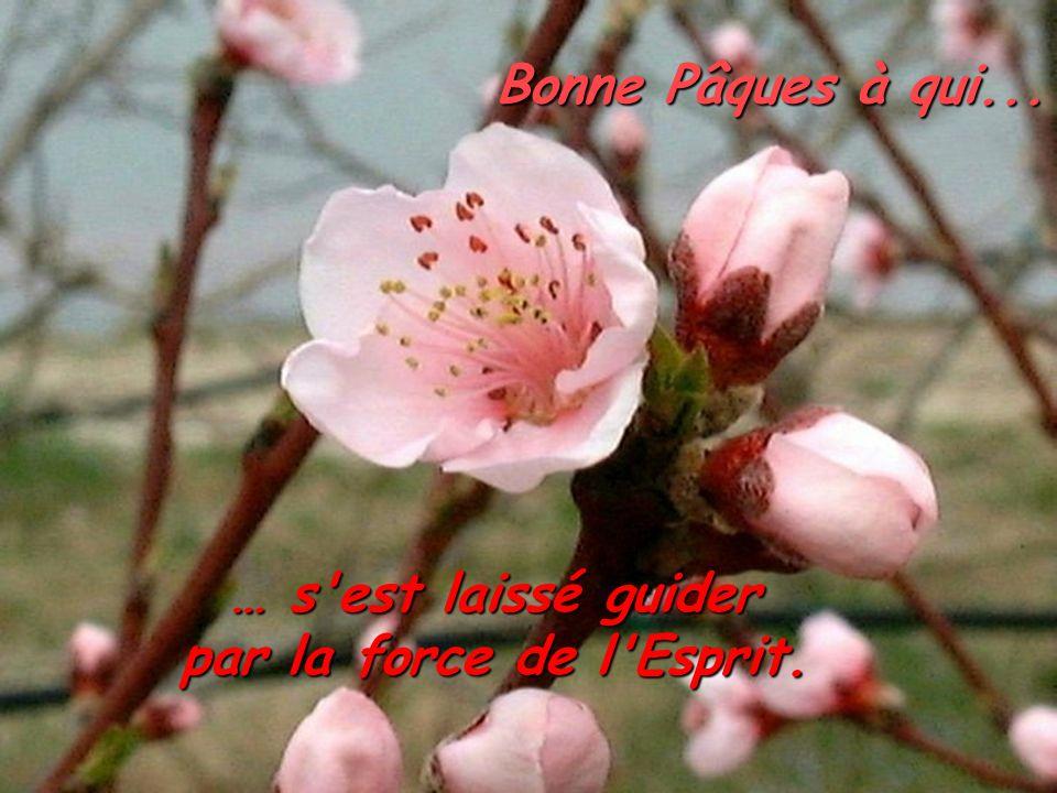 Bonne Pâques à qui... … s'est laissé guider par la force de l'Esprit.