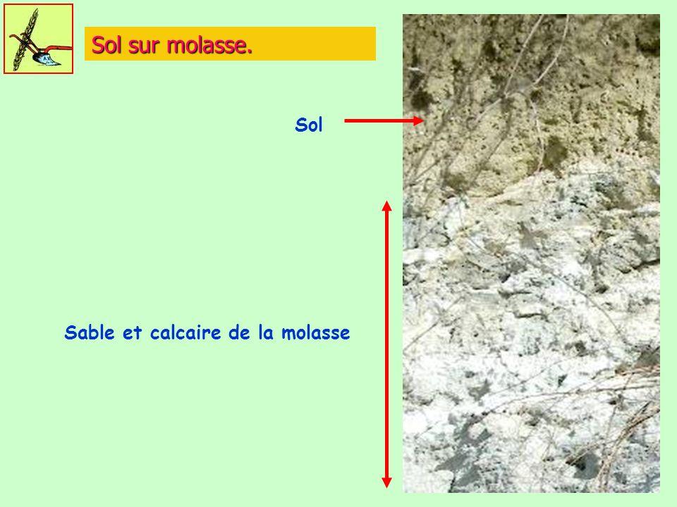 Sol sur molasse. Sable et calcaire de la molasse Sol