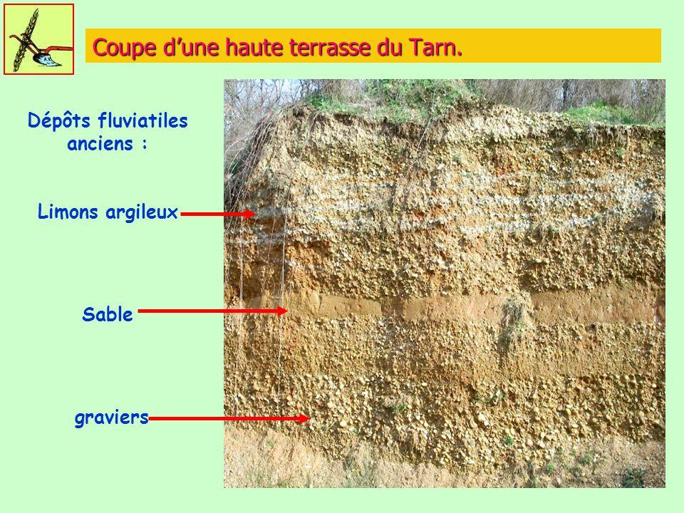 Coupe dune haute terrasse du Tarn. Dépôts fluviatiles anciens : Limons argileux Sable graviers