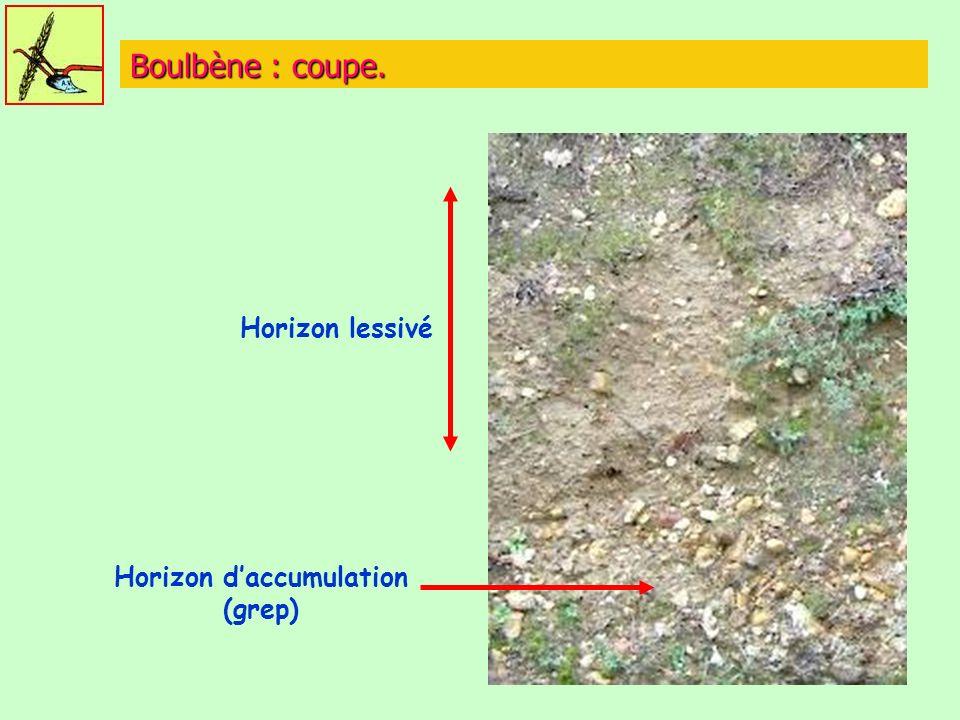 Boulbène : coupe. Horizon lessivé Horizon daccumulation (grep)