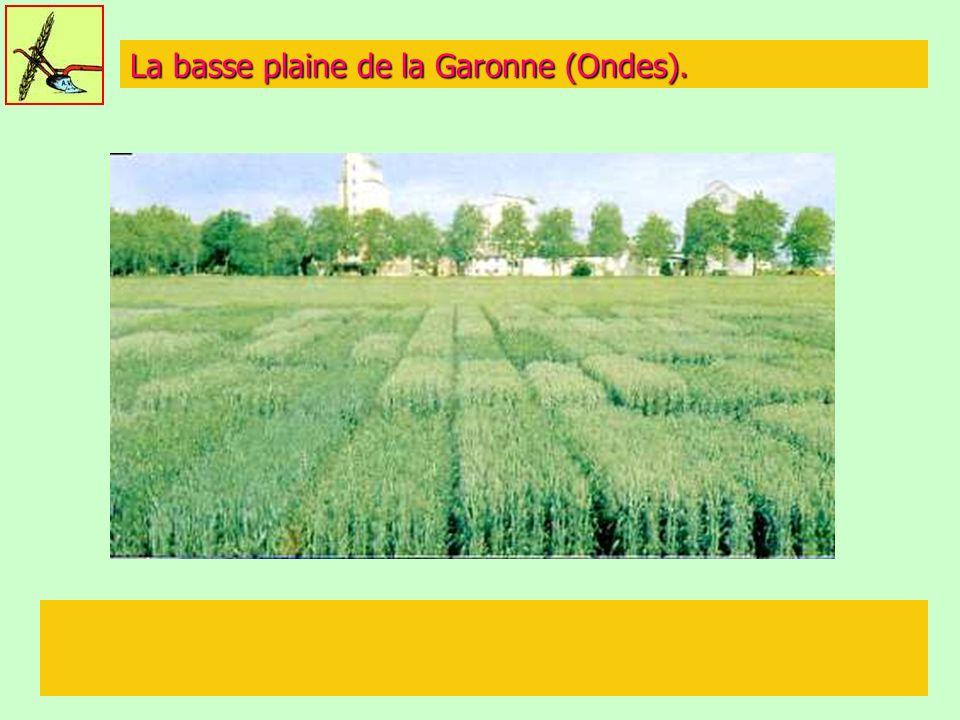 La basse plaine de la Garonne (Ondes).