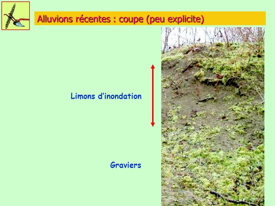 Alluvions récentes : coupe (peu explicite) Limons dinondation Graviers