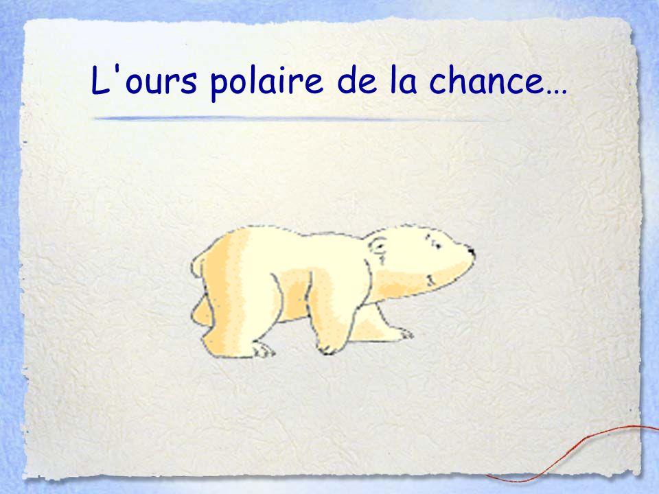 L'ours polaire de la chance…