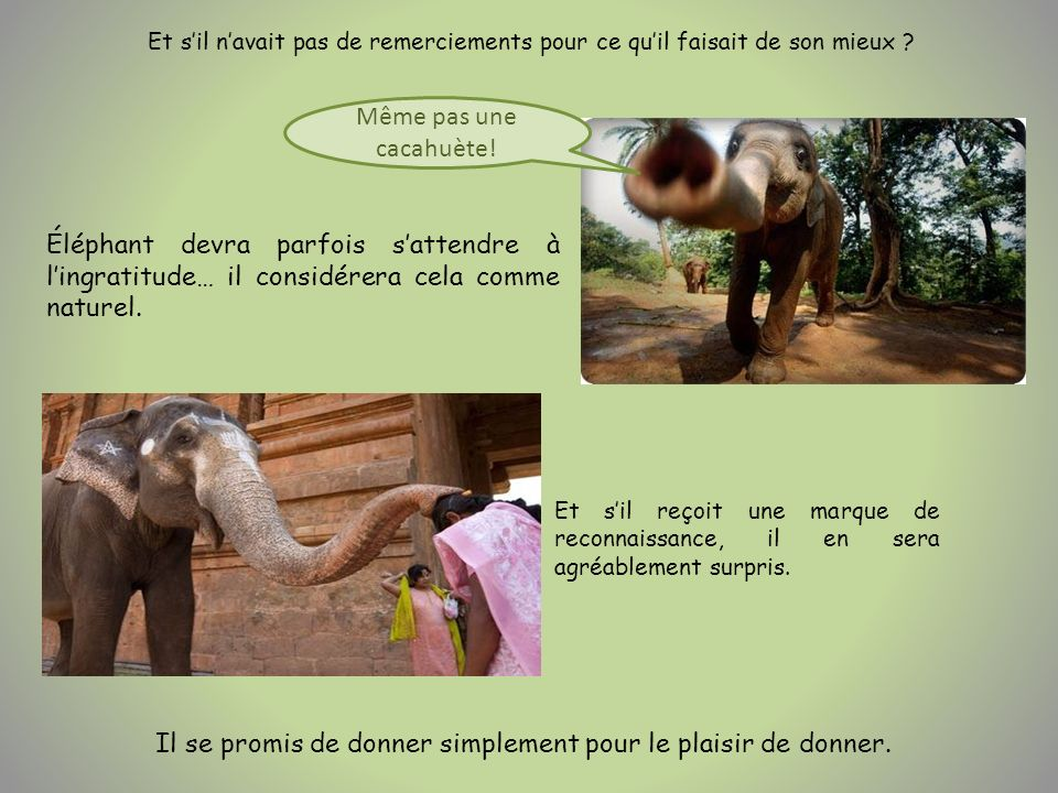 Éléphant devra parfois sattendre à lingratitude… il considérera cela comme naturel. Même pas une cacahuète! Et sil reçoit une marque de reconnaissance