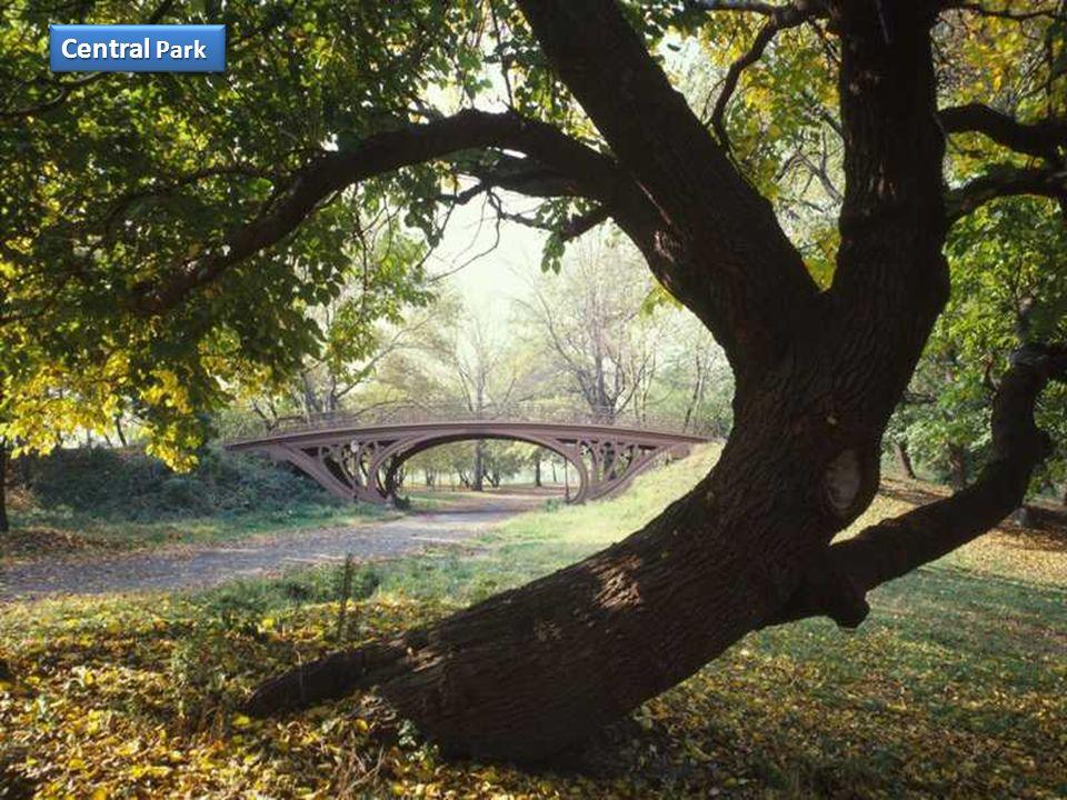 Central Park est un espace vert d'une superficie de 341 hectares (3,41 km², environ 4 km sur 800 m), situé dans le borough de Manhattan à New York. Il