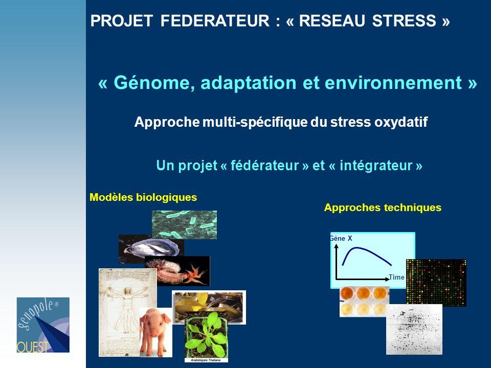 PROJET FEDERATEUR : « RESEAU STRESS » Un projet « fédérateur » et « intégrateur » « Génome, adaptation et environnement » Approche multi-spécifique du stress oxydatif Time Gène X Modèles biologiques Approches techniques