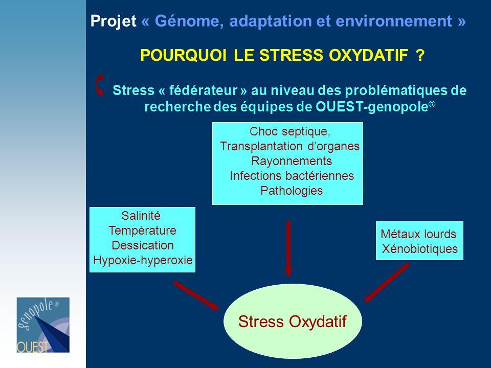 Projet « Génome, adaptation et environnement » POURQUOI LE STRESS OXYDATIF .