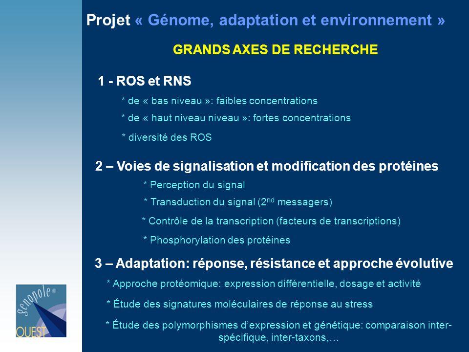 Projet « Génome, adaptation et environnement » GRANDS AXES DE RECHERCHE 1 - ROS et RNS 2 – Voies de signalisation et modification des protéines 3 – Adaptation: réponse, résistance et approche évolutive * de « bas niveau »: faibles concentrations * de « haut niveau niveau »: fortes concentrations * diversité des ROS * Perception du signal * Transduction du signal (2 nd messagers) * Contrôle de la transcription (facteurs de transcriptions) * Phosphorylation des protéines * Approche protéomique: expression différentielle, dosage et activité * Étude des signatures moléculaires de réponse au stress * Étude des polymorphismes dexpression et génétique: comparaison inter- spécifique, inter-taxons,…