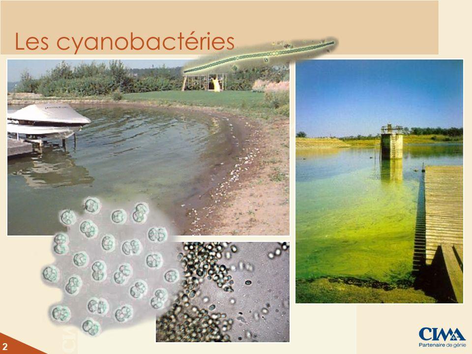 2 Les cyanobactéries