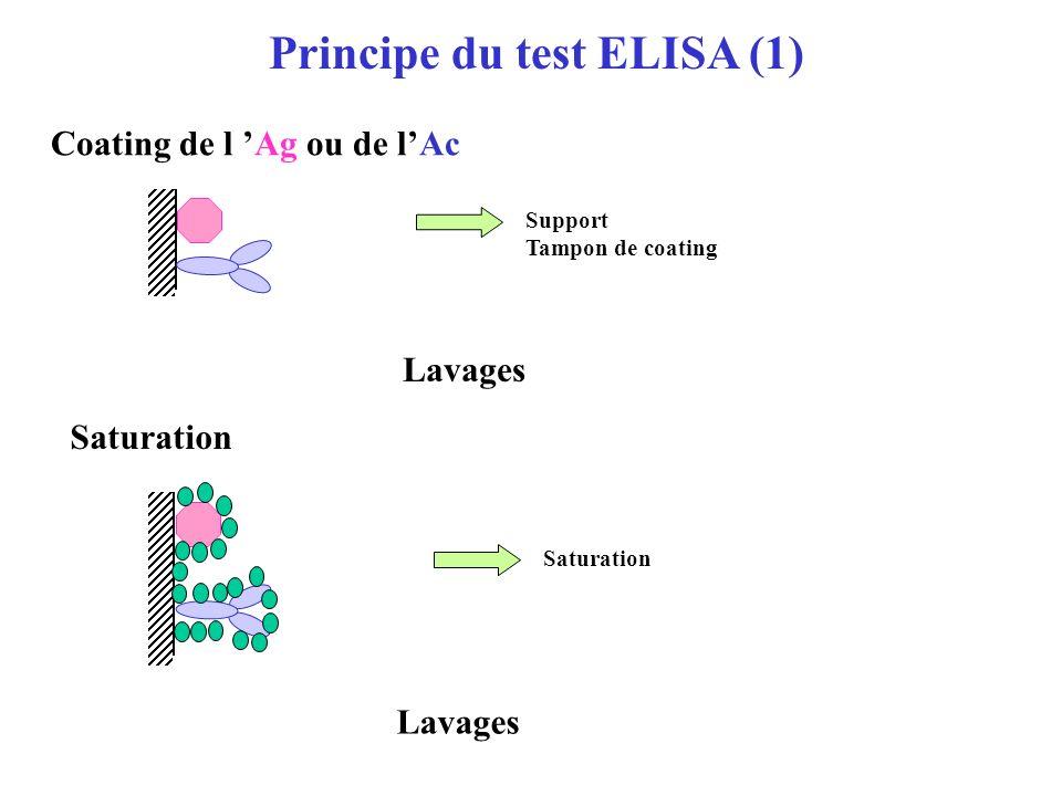 Anticorps Antigène ELISA EnzymeLinkedImmunoSorbentAssay E E