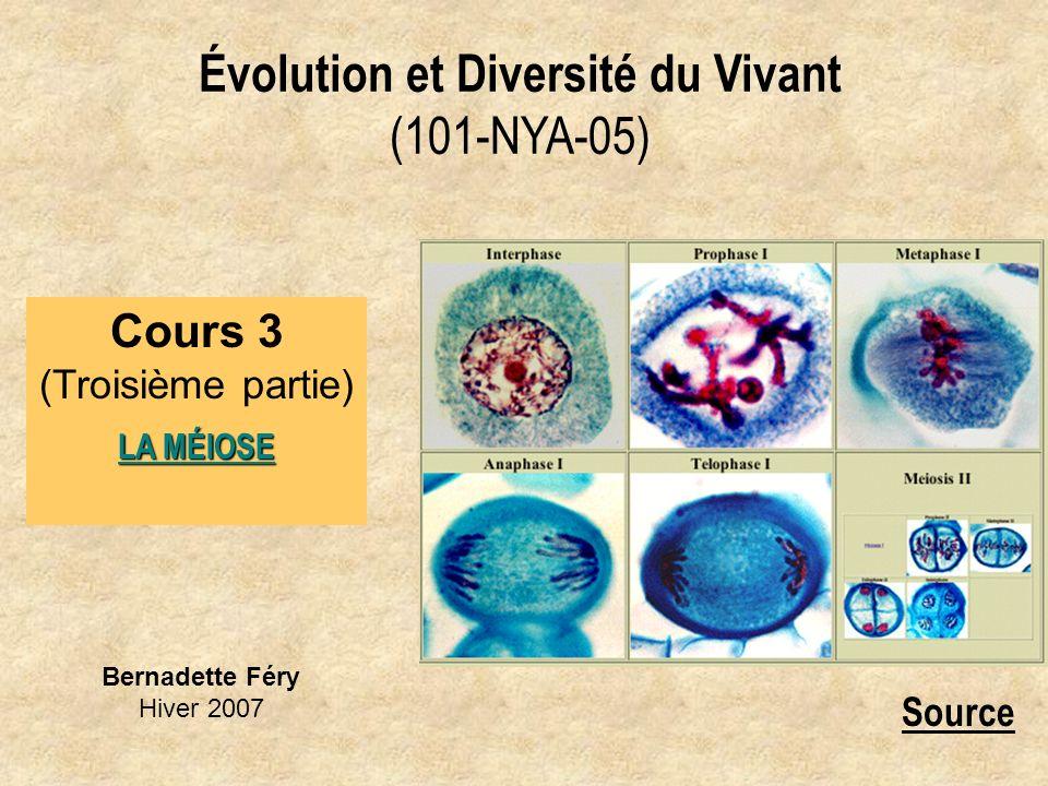 Bernadette Féry Hiver 2007 Évolution et Diversité du Vivant (101-NYA-05) Cours 3 (Troisième partie) LA MÉIOSE Source